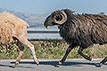 Kreta-Fotoreise, Bild 28