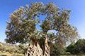 Kreta-Fotoreise, Bild 21