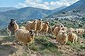 Kreta-Fotoreise, Bild 20