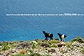 Kreta Südküste Frangokastello Seaside Cottages, Bild 13