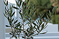 Kreta Südküste Apartments  Plakias Suites, Bild 15